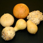 Gourds and winter squash are native to the Americas.