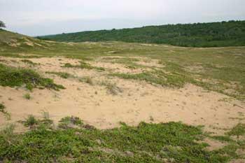 Sand dunes along Beaver Creek.