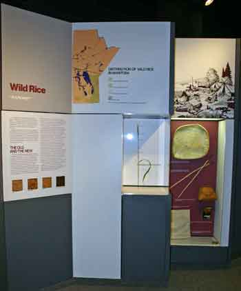 You can learn more about wild rice in The Manitoba Museum's Boreal Forest Gallery.