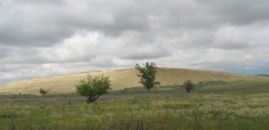 I had a wonderful time looking for rare plants in the Great Sand Hills of Saskatchewan.