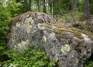 Rock outcrops are covered with a diverse assemblage of lichens and mosses.