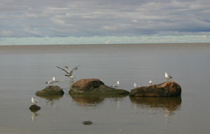 Gulls and shorebirds were the only denizens of Victoria Beach on September 8th.