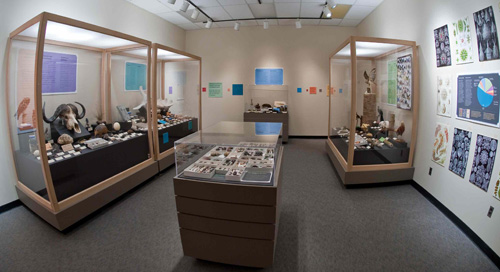The completed Natural Wonders exhibit in the Museum's Discovery Room.