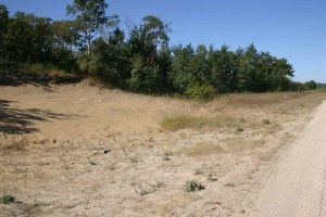 Dune cutaways along roadsides in sandy areas provide habitat for rare bugseed plants.