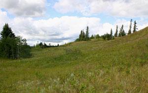 Macoun travelled along the Carlton trail through the Brandon Sand Hills.