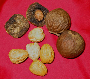Walnuts occur in the center of a leathery fruit that dried to a brown colour.