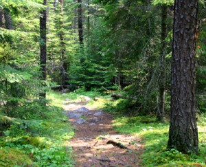 Hiking trail in the Whiteshell.
