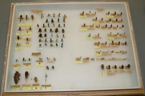Storage case with insect groups Lepidoptera (moths) and Odonata (dragonflies and damselflies)