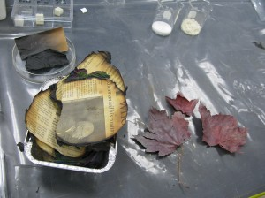 Parylene coated newspapers and leaves