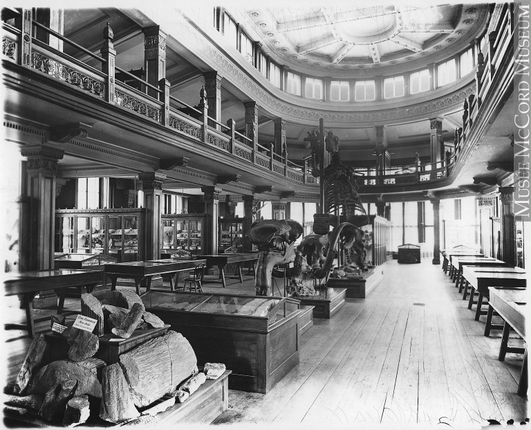 The Redpath Museum in c. 1893, with the Megatherium prominently exhibited. (photo: McCord Museum)